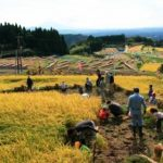 農業体験in八重の棚田