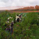 実りまるごと収穫体験事業